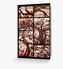 African Shadow Trees Greeting Card