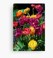 colour cluster Canvas Print