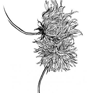Dandelions by wyrdwords