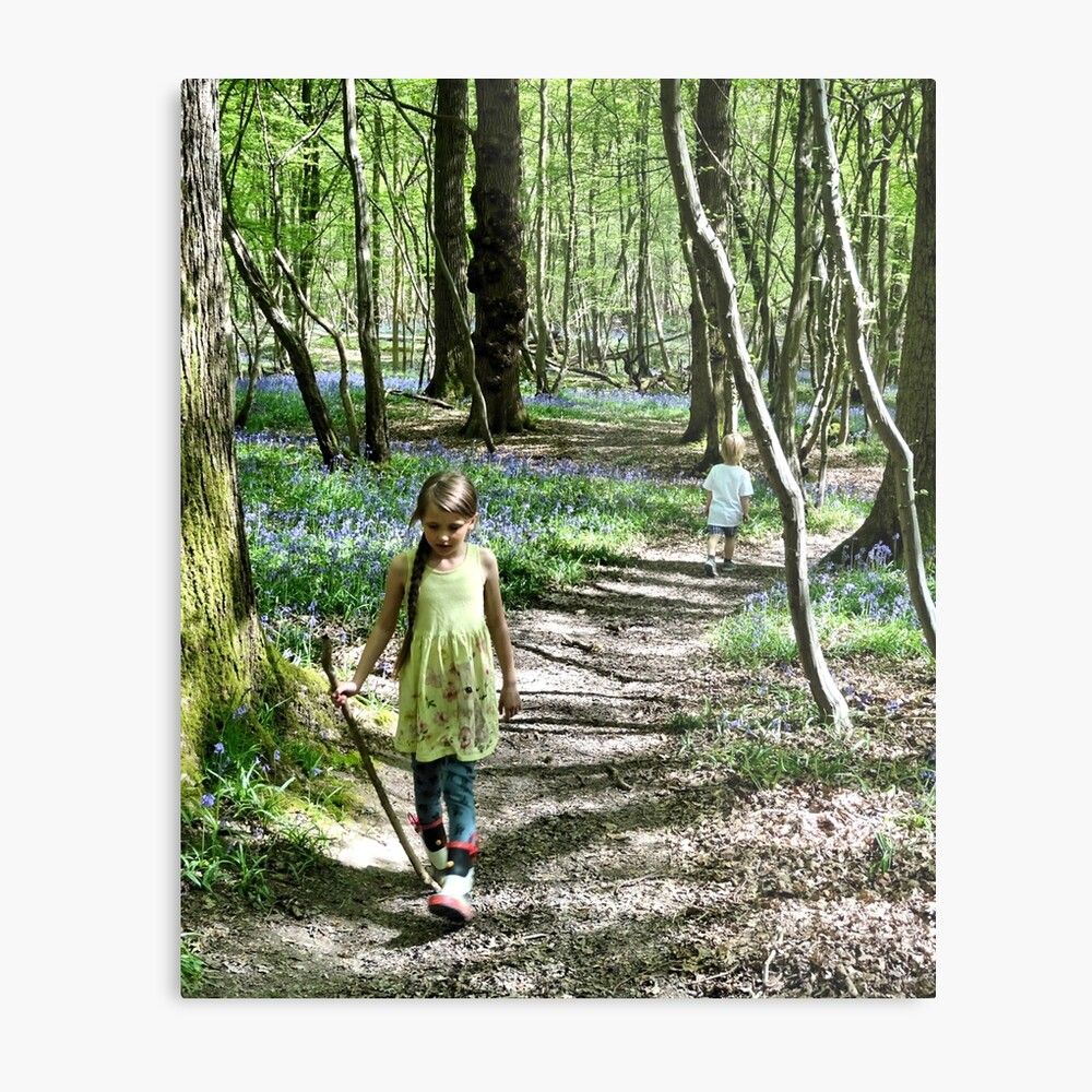 In the bluebell woods Metal Print