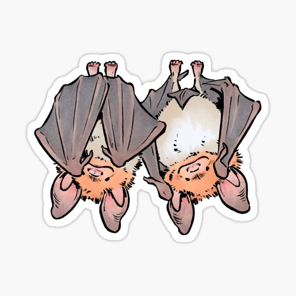 Greater mouse-eared bats Sticker