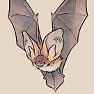 Grey long-eared bat by HenriekeG