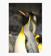 Emperor Penguin Photographic Print