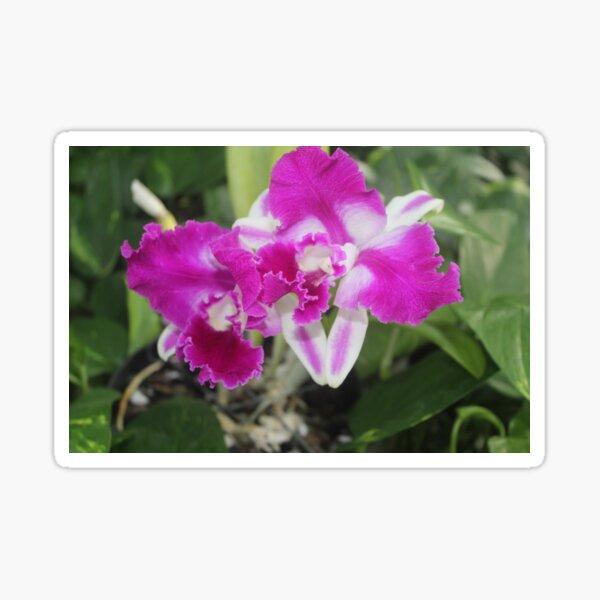 Purple Orchid Photo Sticker