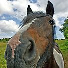 Beautiful horse. Seen at a Wales riding centre by Remo Kurka