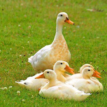 I'm Duckie by kimbarose