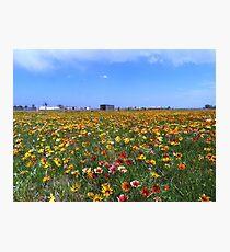 Flowerscape Photographic Print