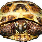 Tortoise by LuckyTortoise