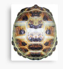 Tortoise Shell - Carapace Metal Print