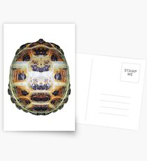 Tortoise Shell - Carapace Postcards