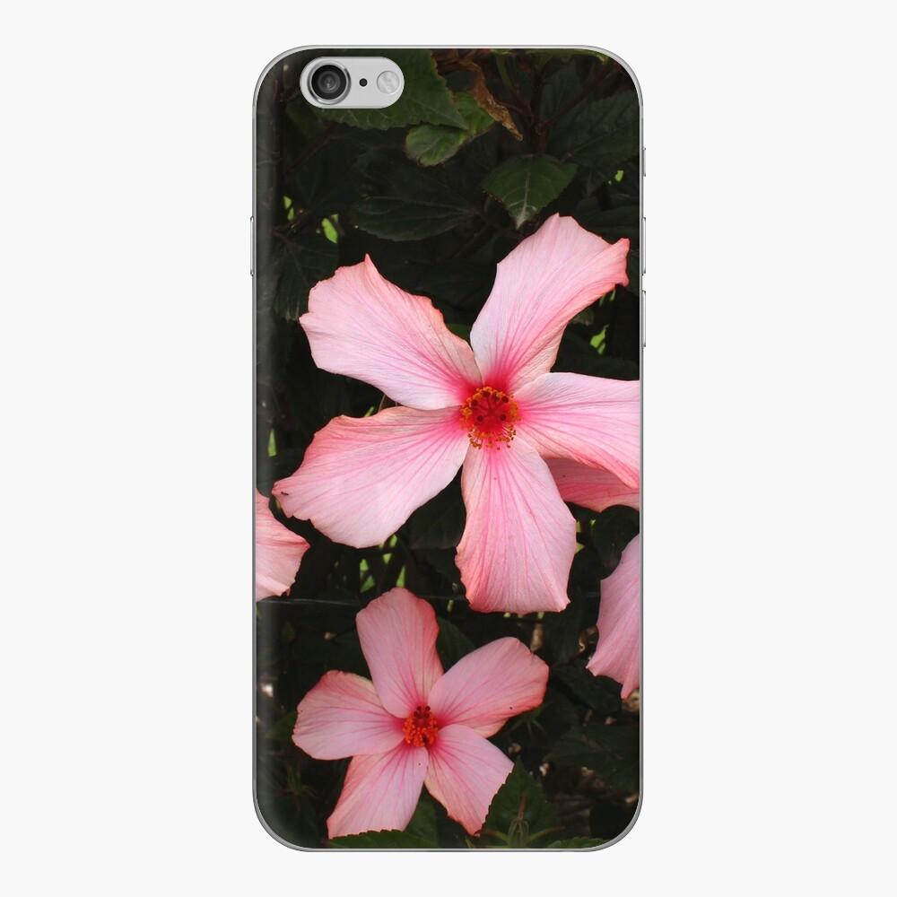 Vier Hibiskusblüten iPhone Klebefolie