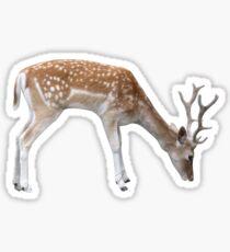 Grazing deer Sticker