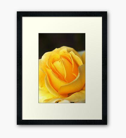Love Is A Rose Framed Print