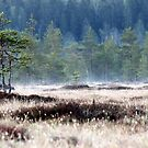 9.5.2016: Pine Trees at Spring Morning by Petri Volanen
