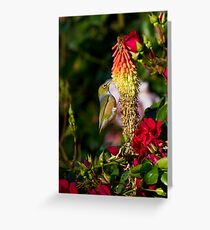 Silver Eye on a Red Hot Poker Greeting Card