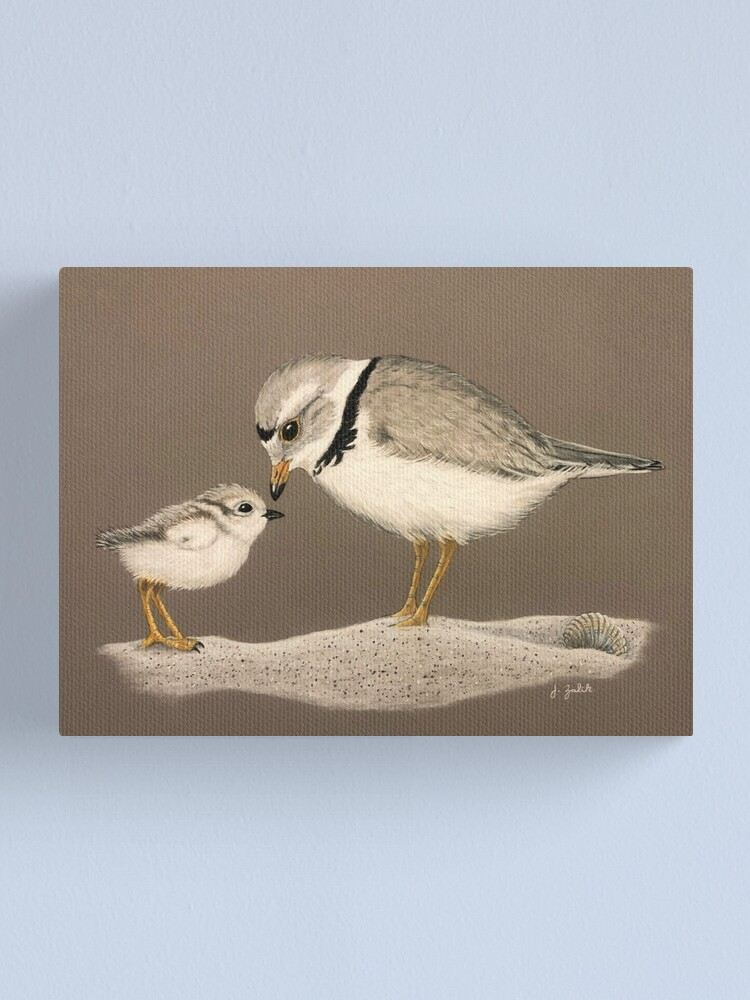 Alternate view of Piping Plover and Chick, Art, Painting, Print, Wall Decor, Home Decor, Shorebird, Beach, Sand, Baby, Summer, Spring Canvas Print