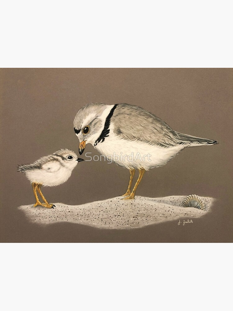 Piping Plover and Chick, Art, Painting, Print, Wall Decor, Home Decor, Shorebird, Beach, Sand, Baby, Summer, Spring by SongbirdArt