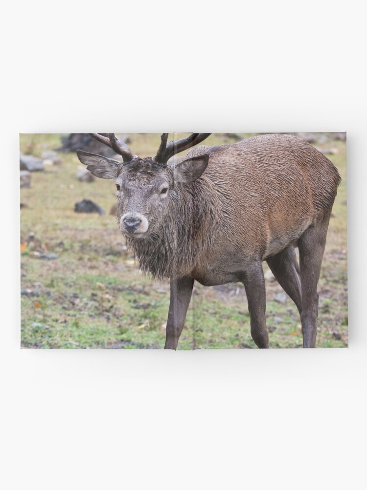 Alternate view of Red Deer Buck Hardcover Journal