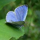 Beautiful Blue by ienemien