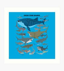 Know Your Sharks Art Print