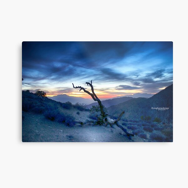 joshuatree5 Metal Print