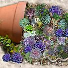 Succulents for sale by NadineMay