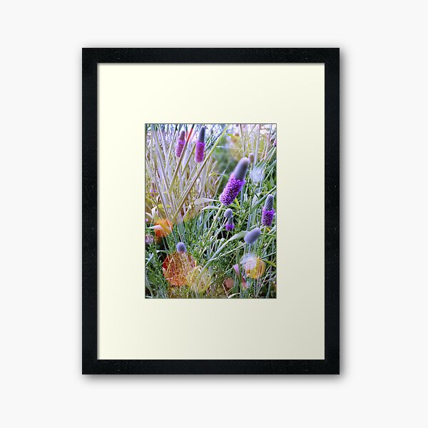 Spring Sunlight Framed Art Print
