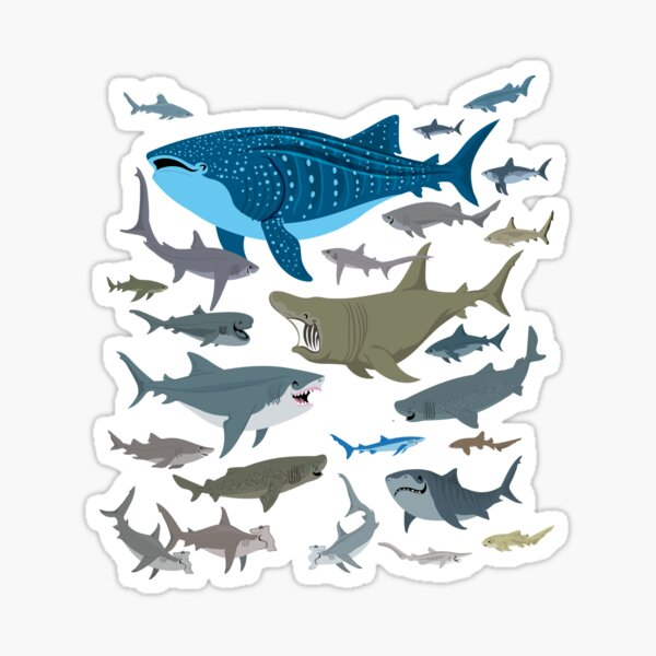 Know Your Sharks Sticker