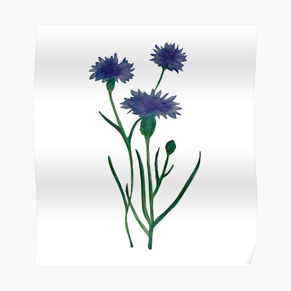 Watercolor cornflower pattern design Poster