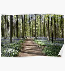Violet Forest - Nature Photography Poster