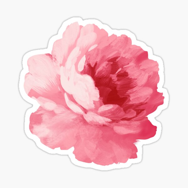 Blume rosa Pfingstrose Sticker