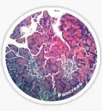 Pancreas Sticker