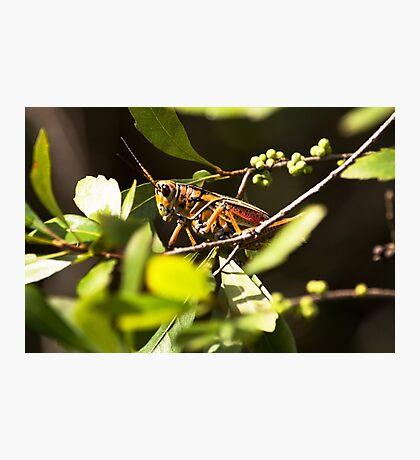 Don't Bug Me! Photographic Print