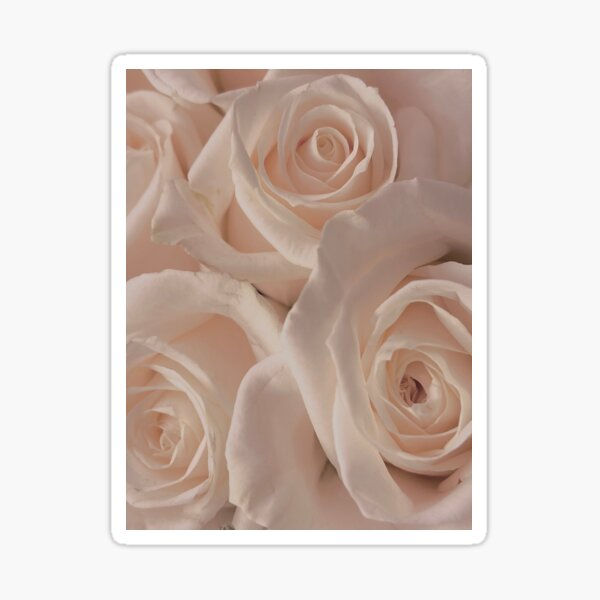 Peachy Roses Sticker