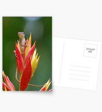 Lizard lookout 2 Postcards