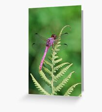 Purple dragonfly sunning Greeting Card