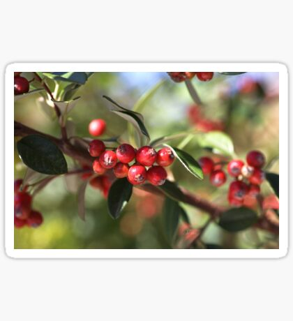 Berry Delight Sticker