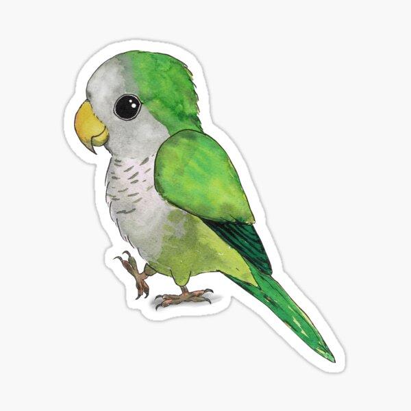 Very cute green quaker parrot Sticker