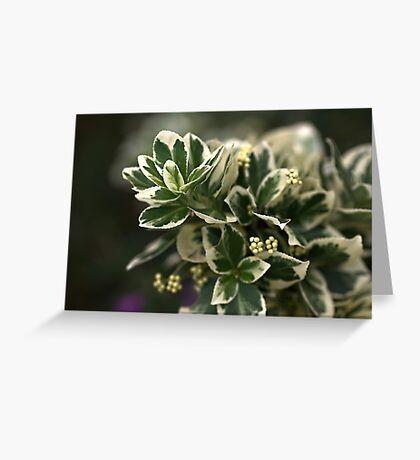 Variegated leaves Greeting Card
