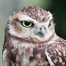 Little Owl by Kawka