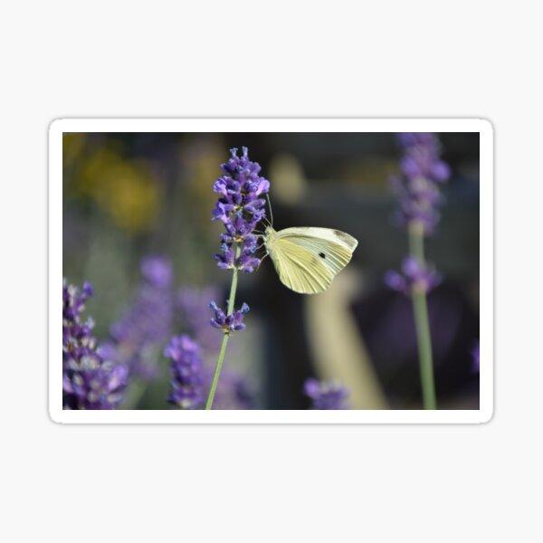 white butterfly Sticker