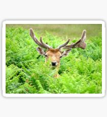 Hello Deer Sticker