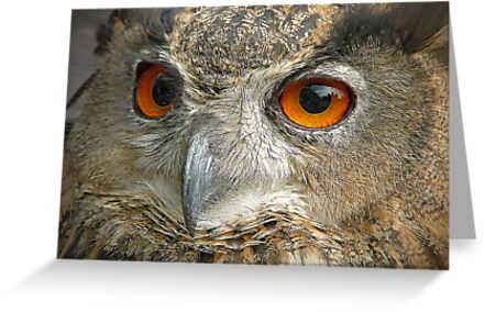 Eagle Owl by Colin  Williams Photography
