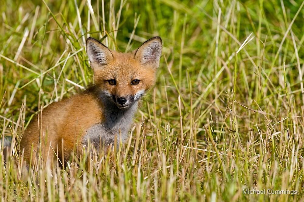 Fox Kit by Michael Cummings