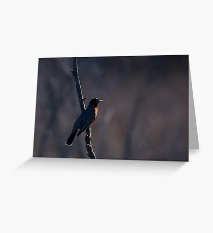 Signs of Spring - Robin Greeting Card