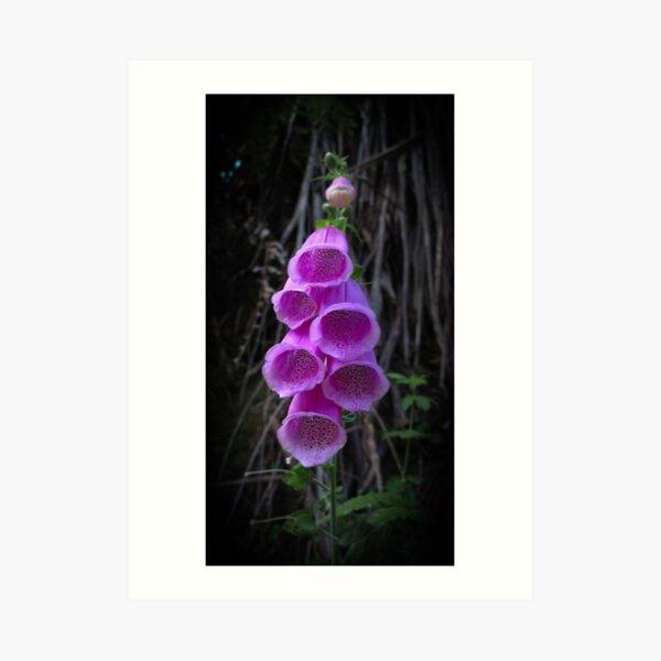 A purple Foxglove flower Art Print