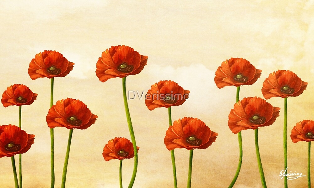 Where the Poppies Bloom by DVerissimo