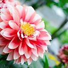 Spring Floral by Robert McMahan