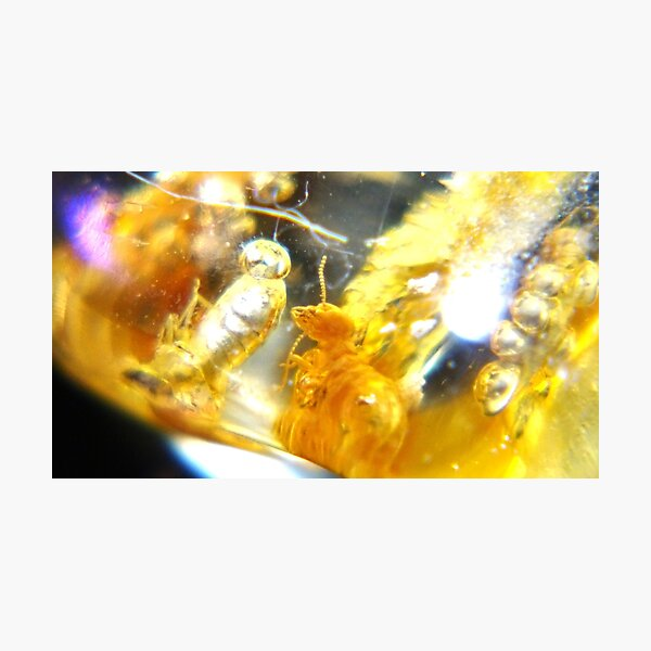 Amber 3: A Fossilized Death Fart Photographic Print