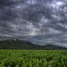 Just Before The Rain by jean-louis bouzou